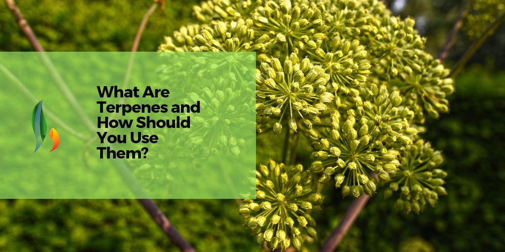 What are Terpenes and how to use them?